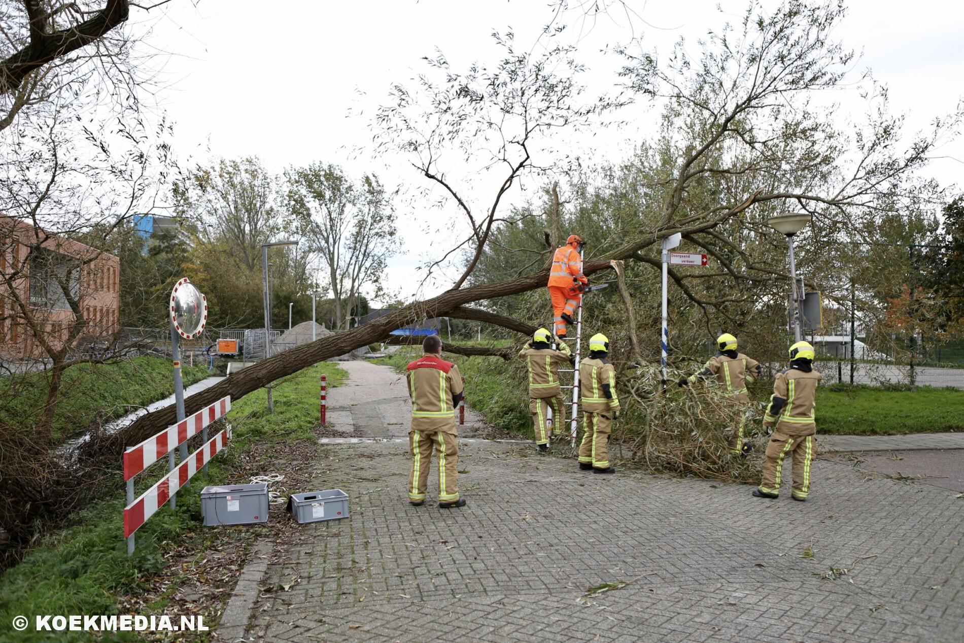 Omgevallen boom blokkeert Tanthofkade in Den Hoorn