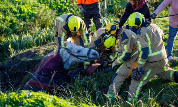 Brandweer zet alles op alles om paard uit sloot te halen Foppenplas-Maasland
