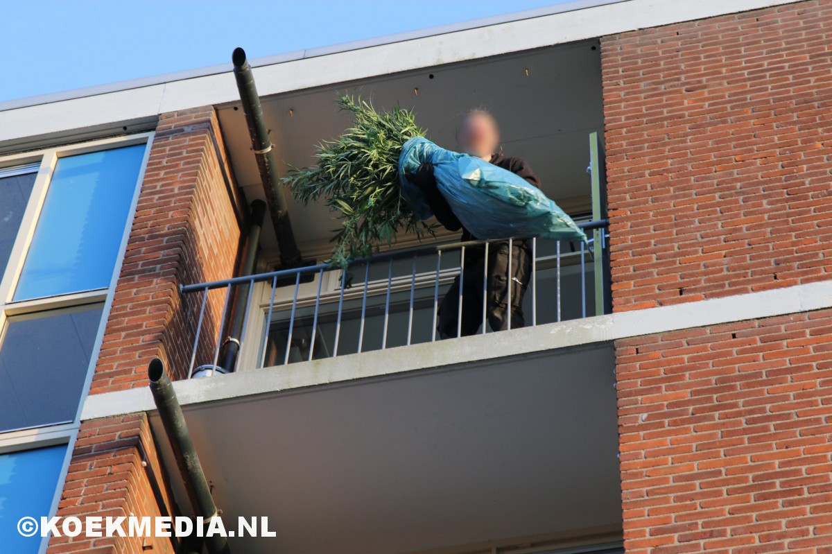 Stormschade leidt naar hennepkwekerij in Maassluis