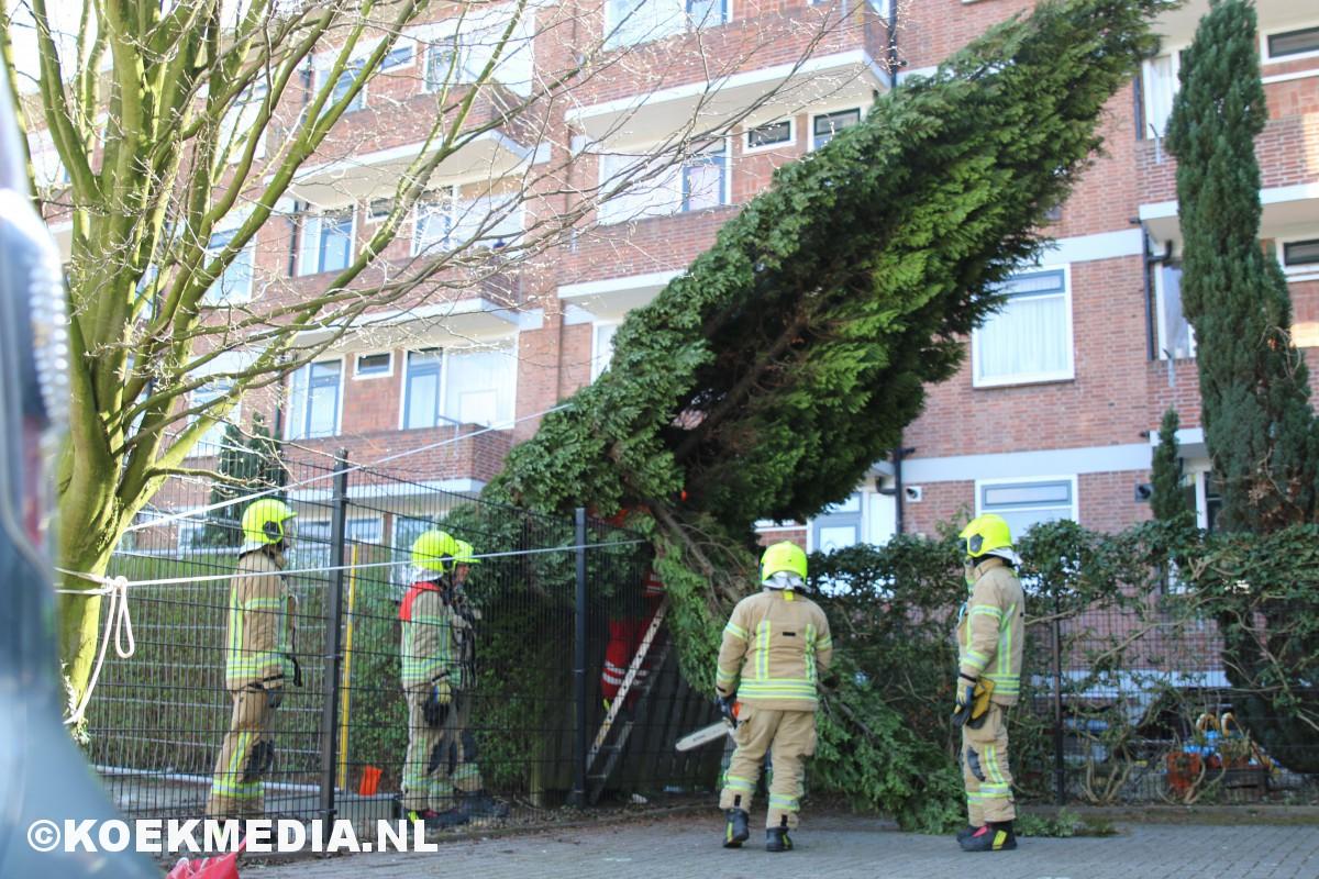 Harde wind velt boom Vondellaan Maassluis.